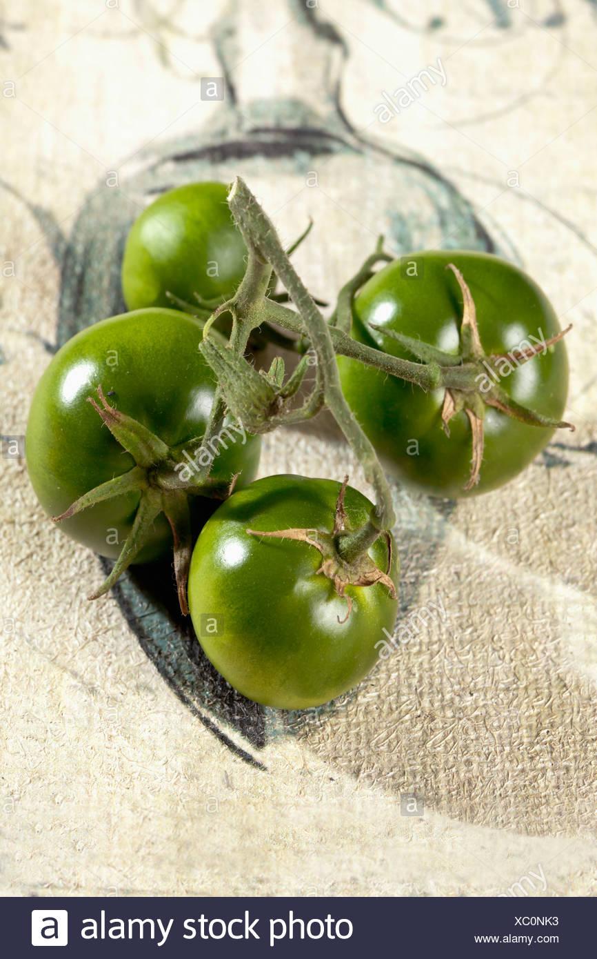 Unripe green tomatos (Solanum lycopersicum) - Stock Image