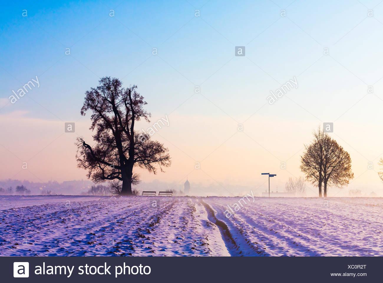 Winterlandschaft mit Bäumen Stock Photo