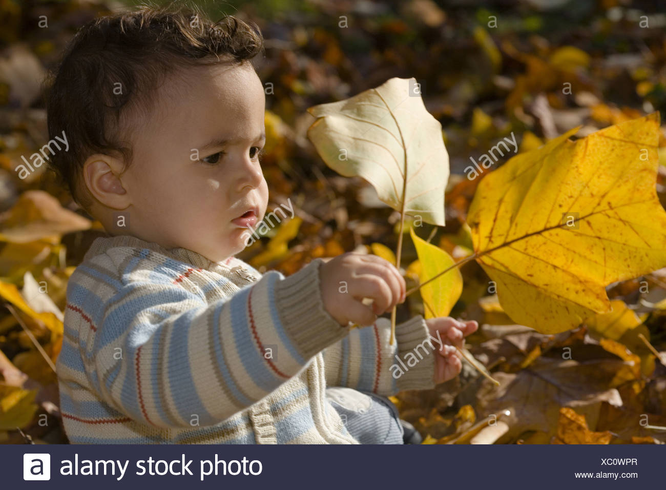 Child playing with autumn foliage, Muenchen, Bavaria, Germany - Stock Image