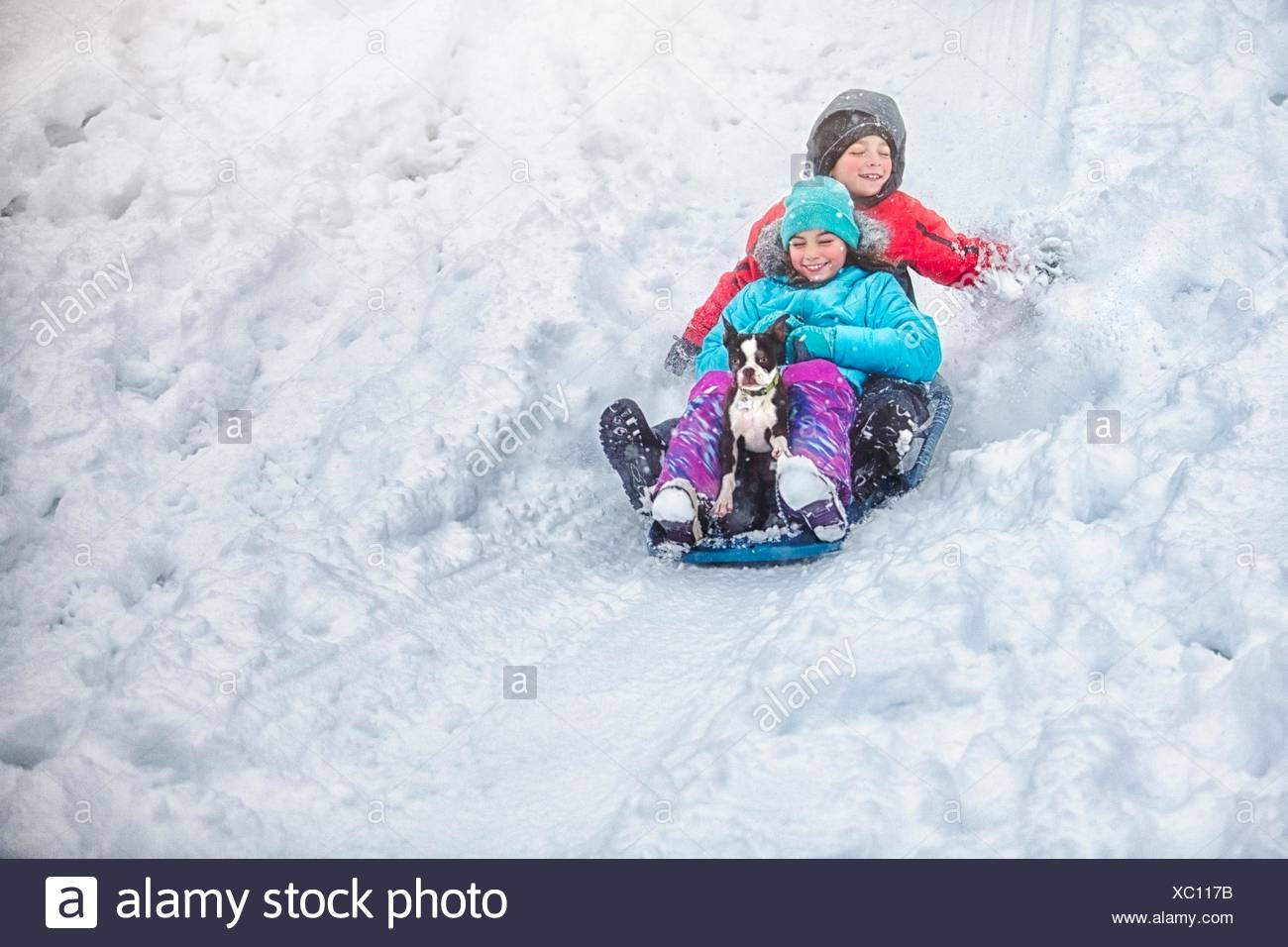 Brother and sister sledging with Boston terrier puppy on snow covered hillside smiling - Stock Image