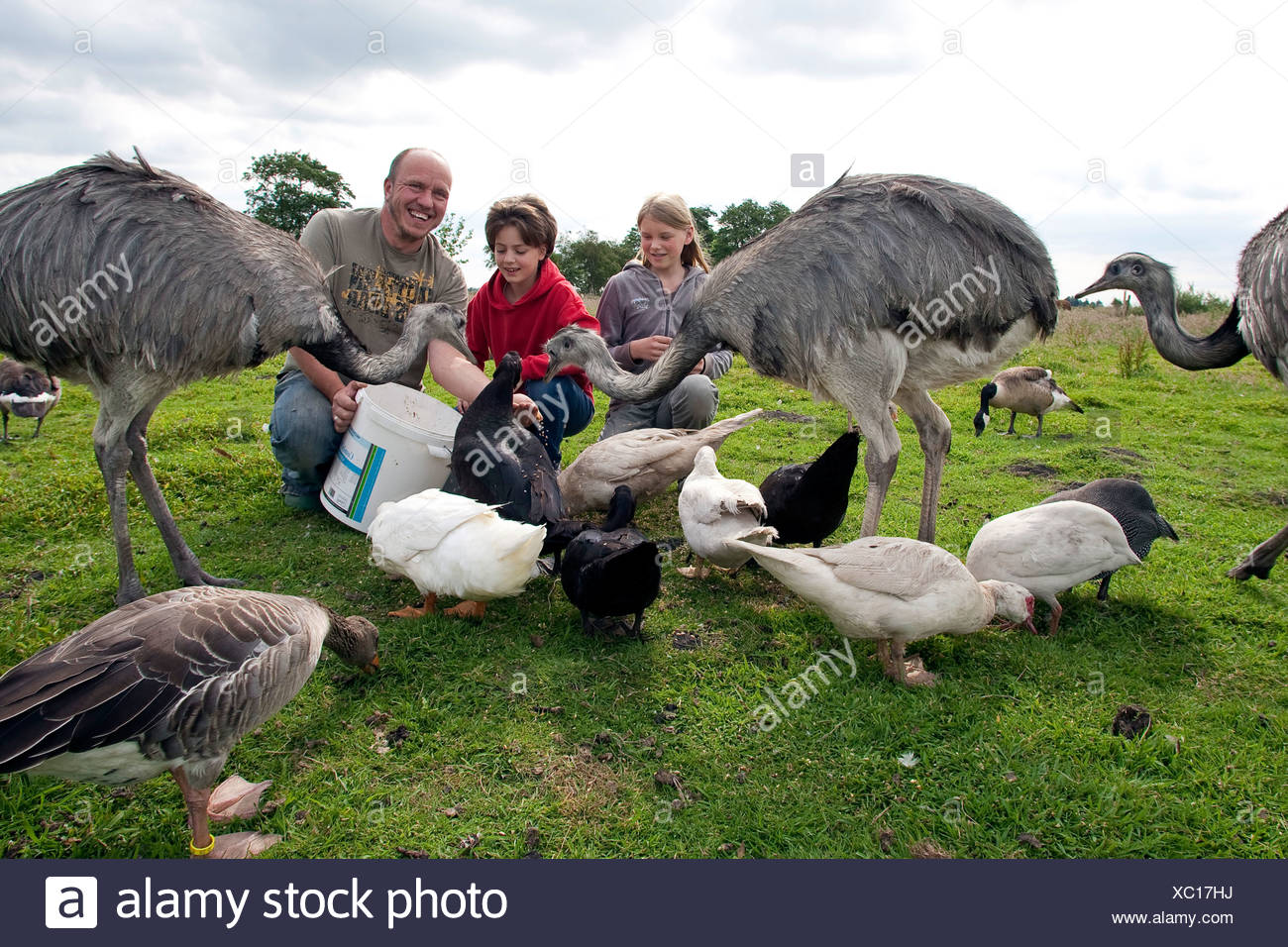 girls with keeper feeding birds in a meadow, Germany - Stock Image