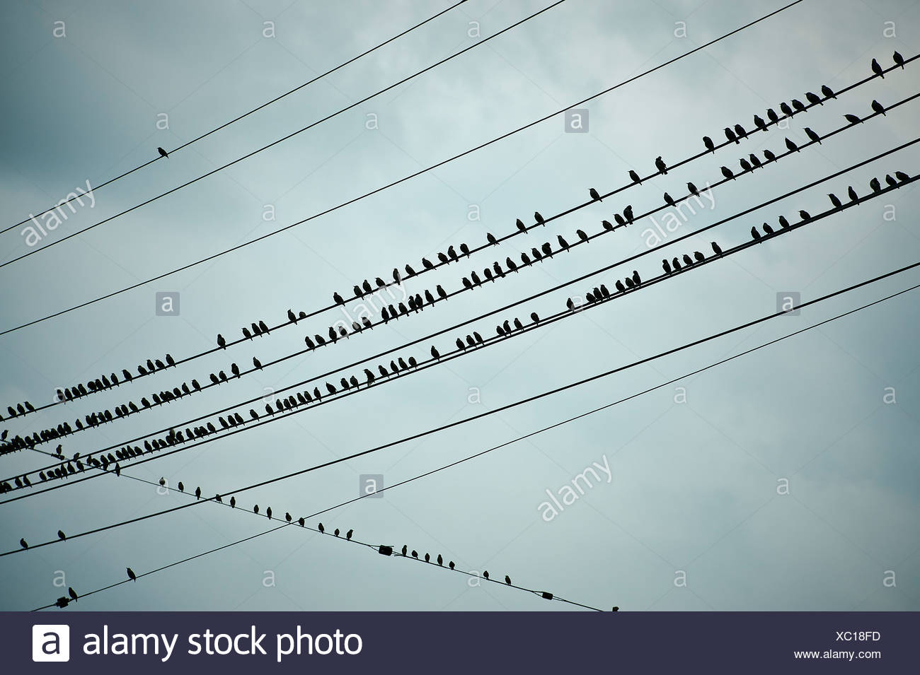 Birds on a wire. - Stock Image