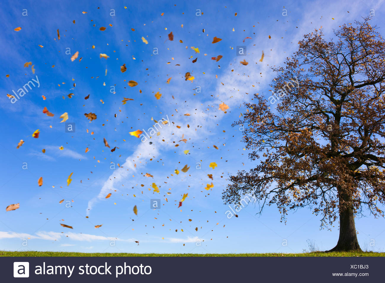 Autumn leaves flying in rural field - Stock Image