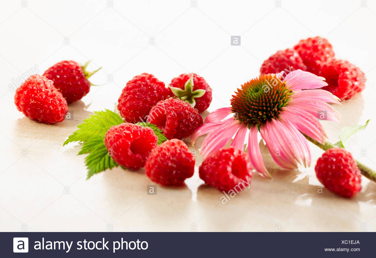 Raspberry, Rubus idaeus cultivar. Several berries arranges with a single Echinacea purpurea flower on white marble. Selective focus. - Stock Image