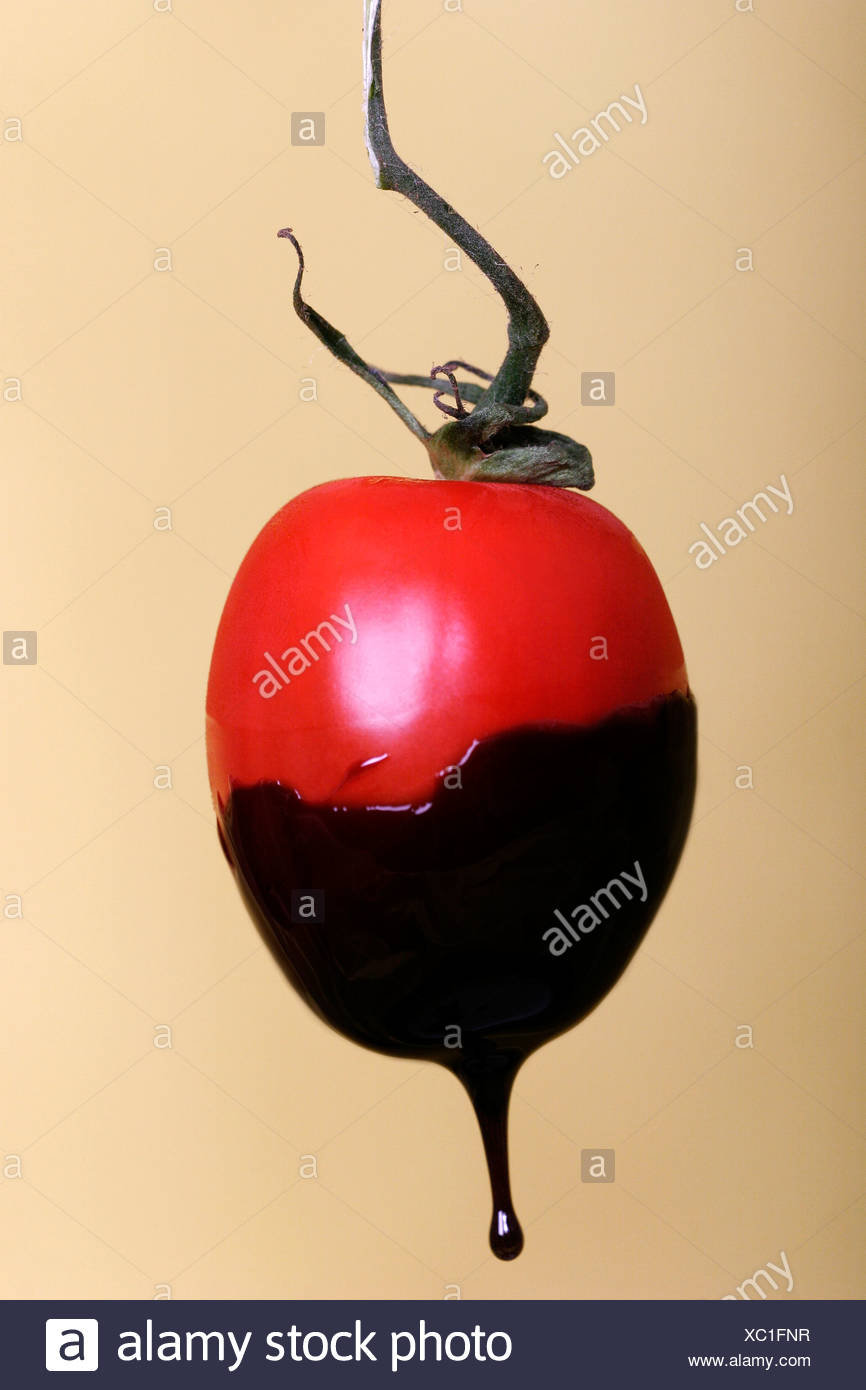 Tomato dipped in chocolate close up - Stock Image