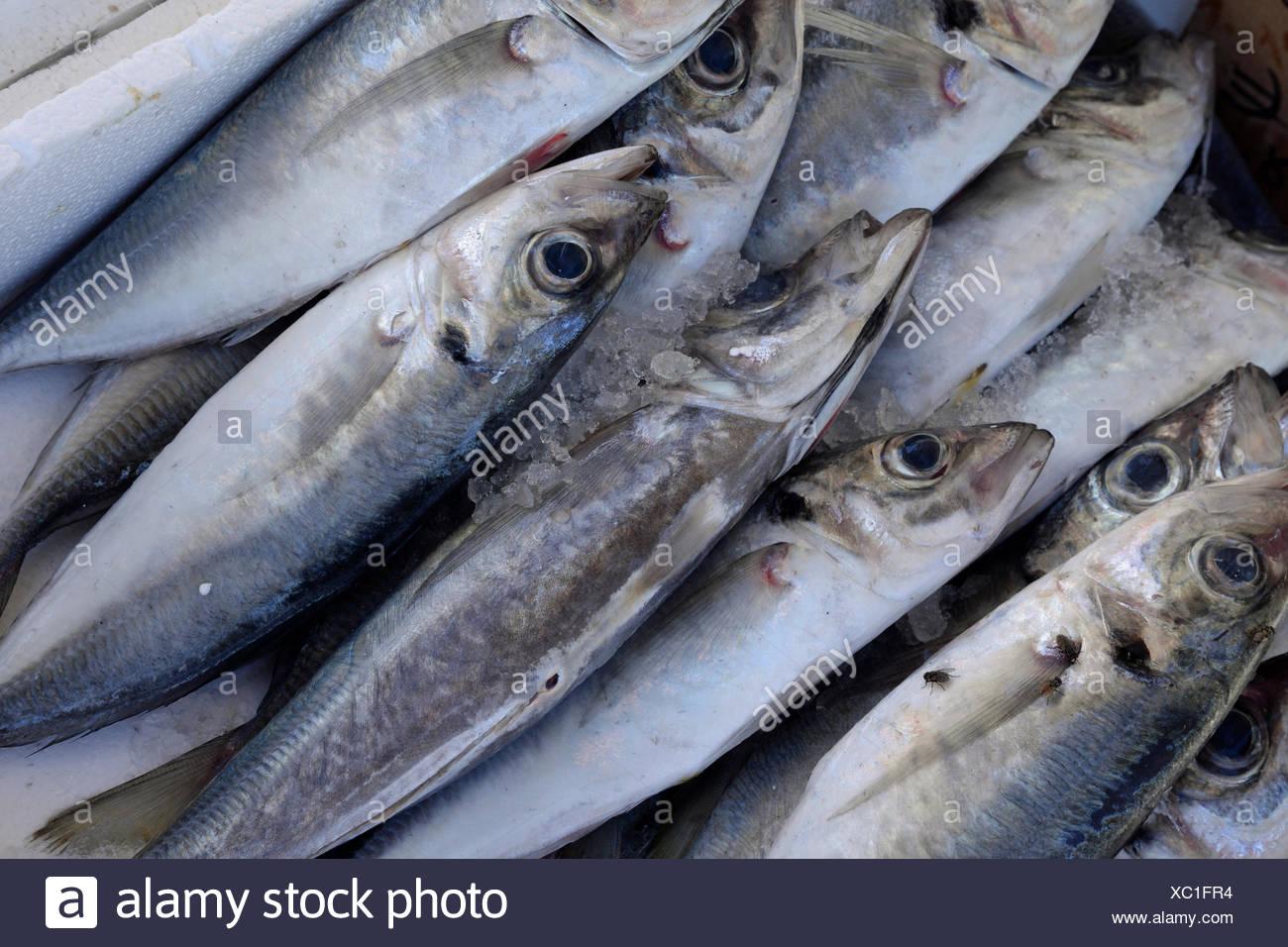 Fisch, Fische, Markt, Fischmarkt, Nahrung, Essen, Lebensmittel, Küche,