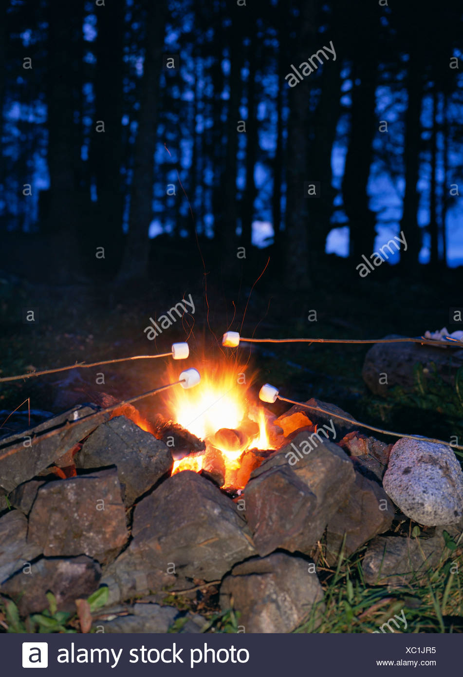 Roasting Marshmallows Over Campfire Close Up AK