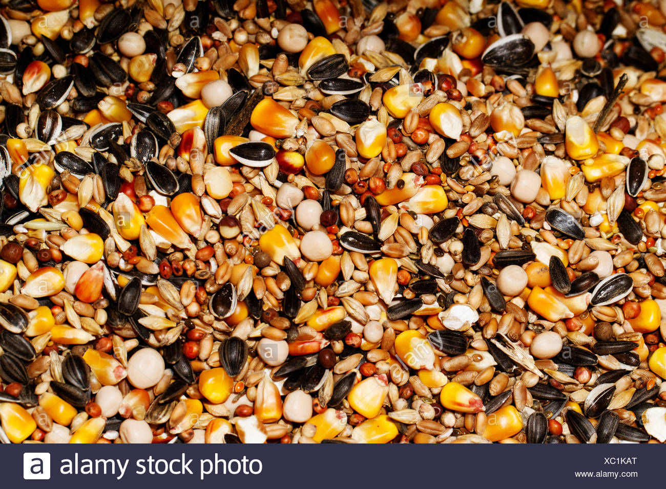 Food for rodents - Stock Image
