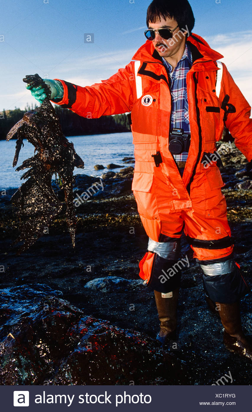 Alaska. Exxon Valdez Oil spill cleanup includes oiled bird carcass removal in the Prince William Sound. - Stock Image