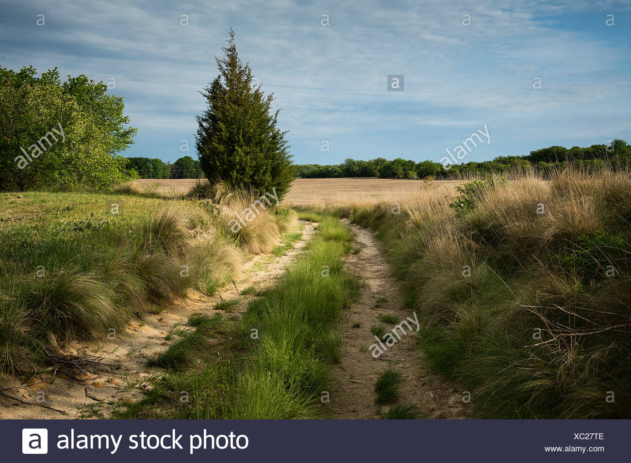 Unpaved country road. - Stock Image