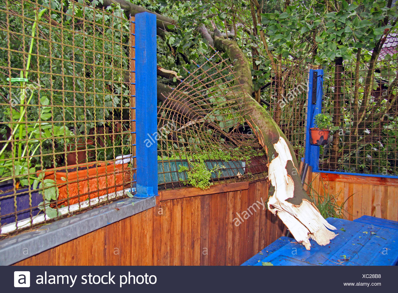 fallen branch of a tree had demolished an iron fence, storm front Ela at 2014-06-09, Germany, North Rhine-Westphalia, Ruhr Area, Essen - Stock Image
