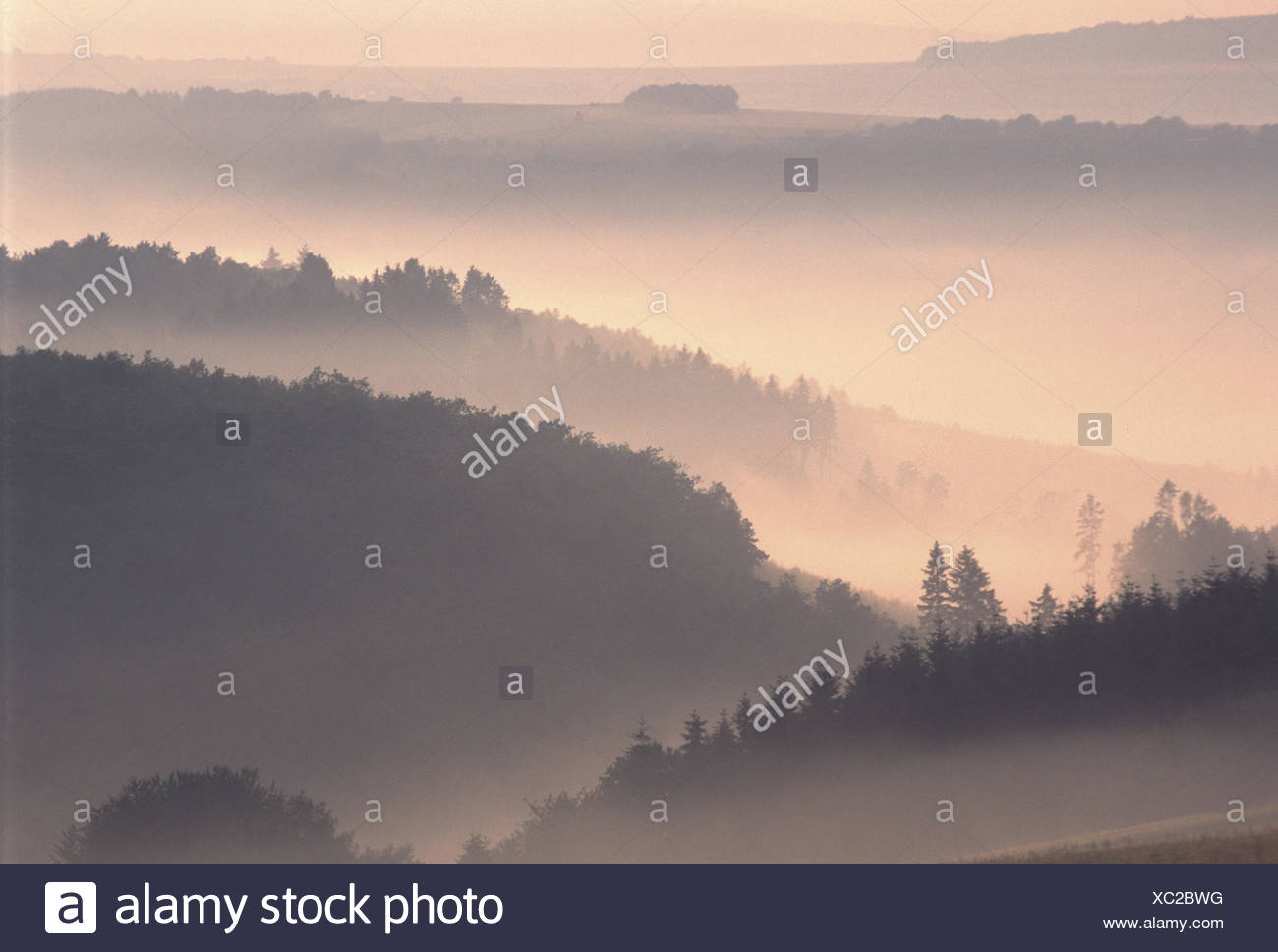 Germany, Rhineland-Palatinate, Hunsrück, hill scenery, fog, morning mood, Europe, scenery, hill, woods, nature, morning fog, morning light, fog patches, rest, silence, loneliness, mysticism, mysteriously - Stock Image