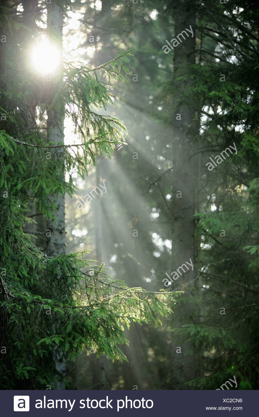 Sunlight in wood glide - Stock Image