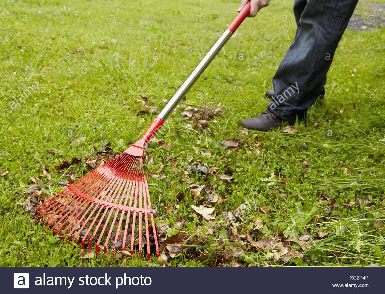 Using sweep rake to pull and collect leaves, garden tool, Guipuzcoa, Basque Country, Spain - Stock Image