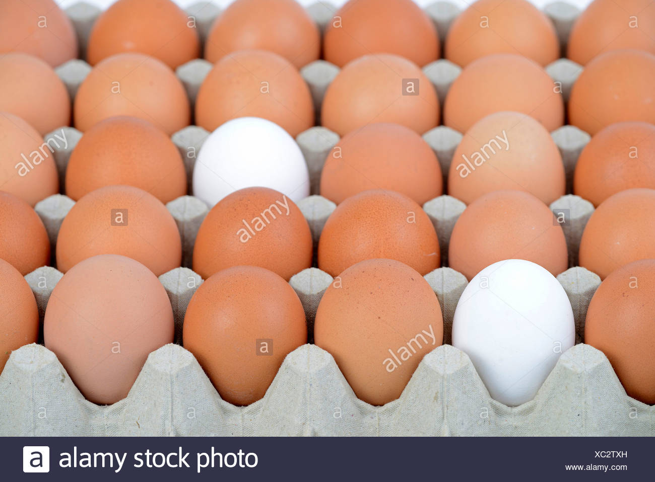 Hen's eggs, white and brown - Stock Image