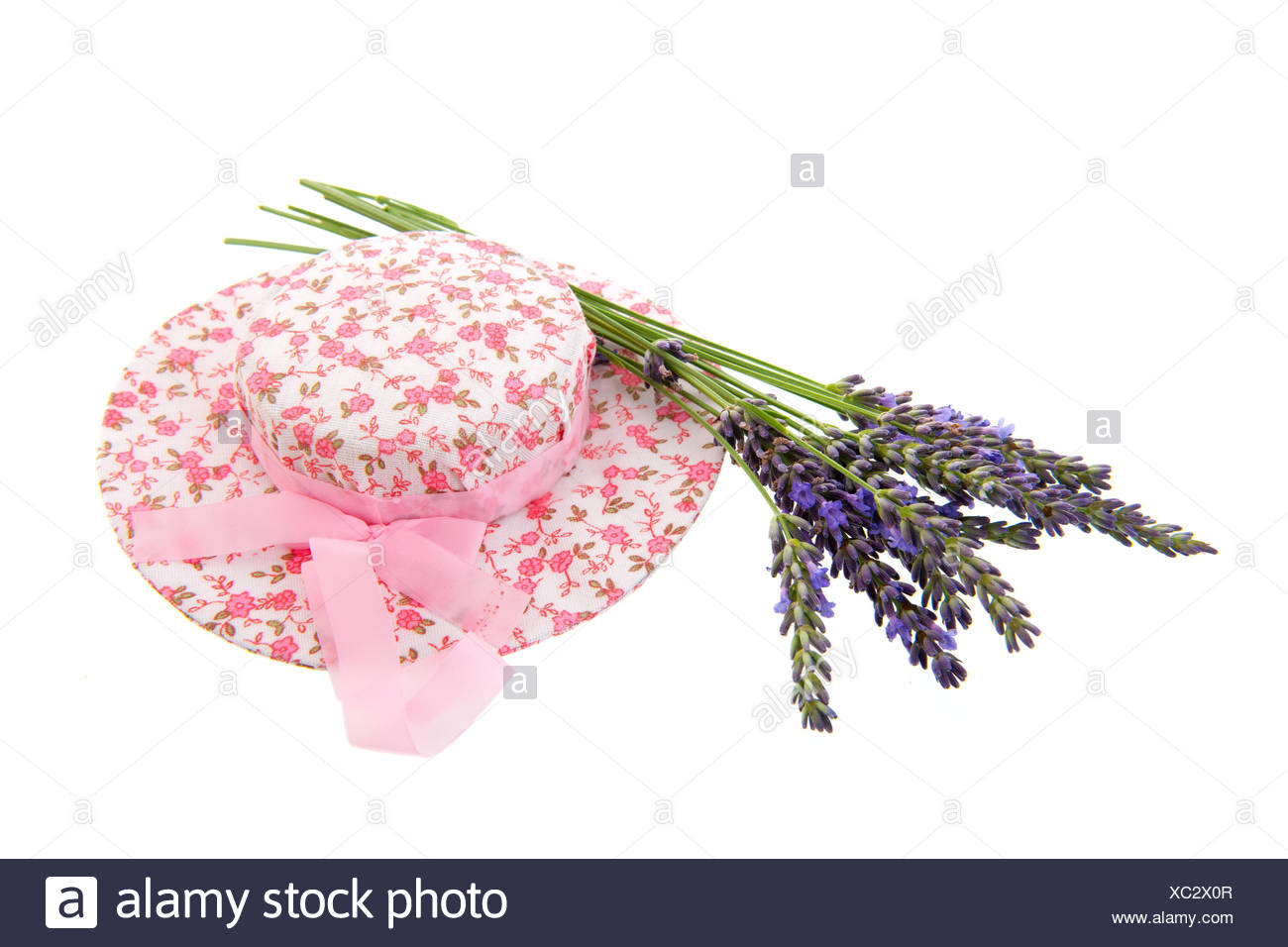 French lavender - Stock Image