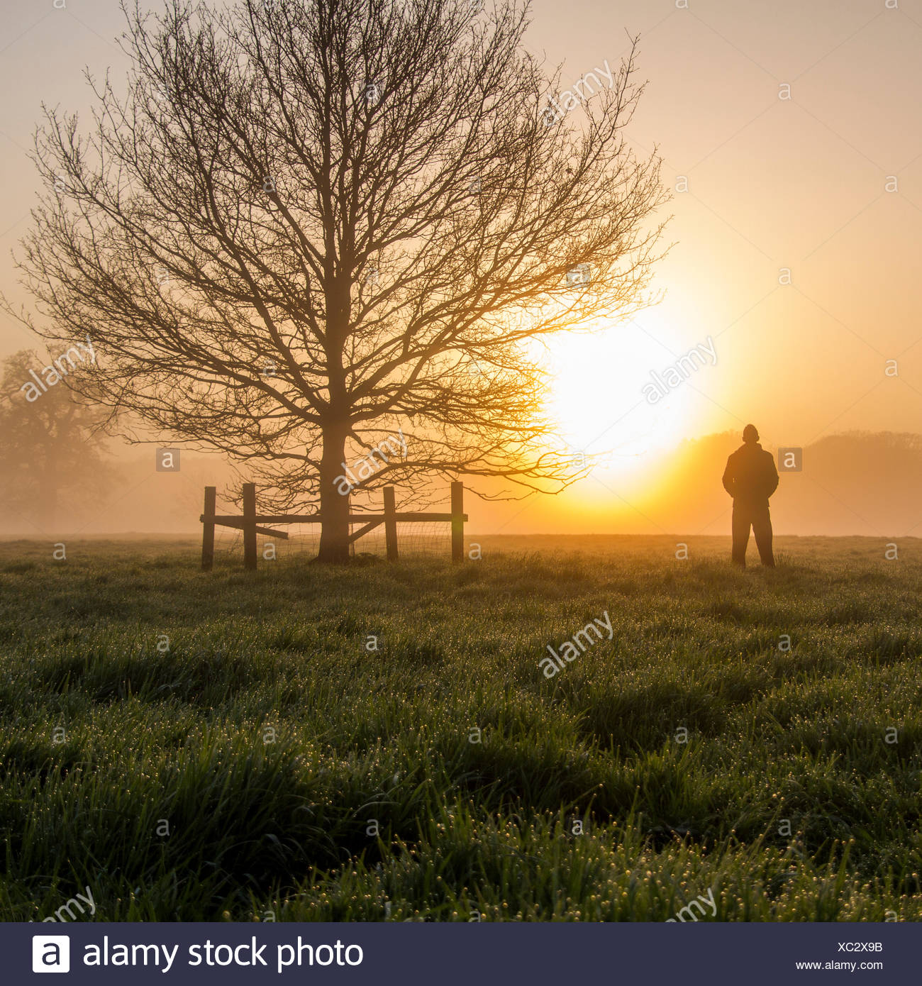 United Kingdom, England, Berkshire, Man watching sunrise - Stock Image