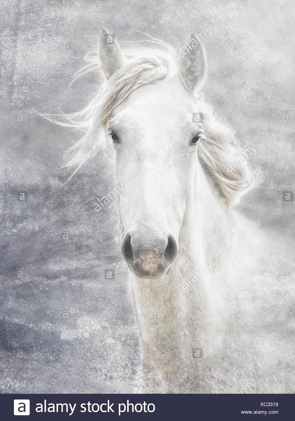 Camargue horse - Stock Image