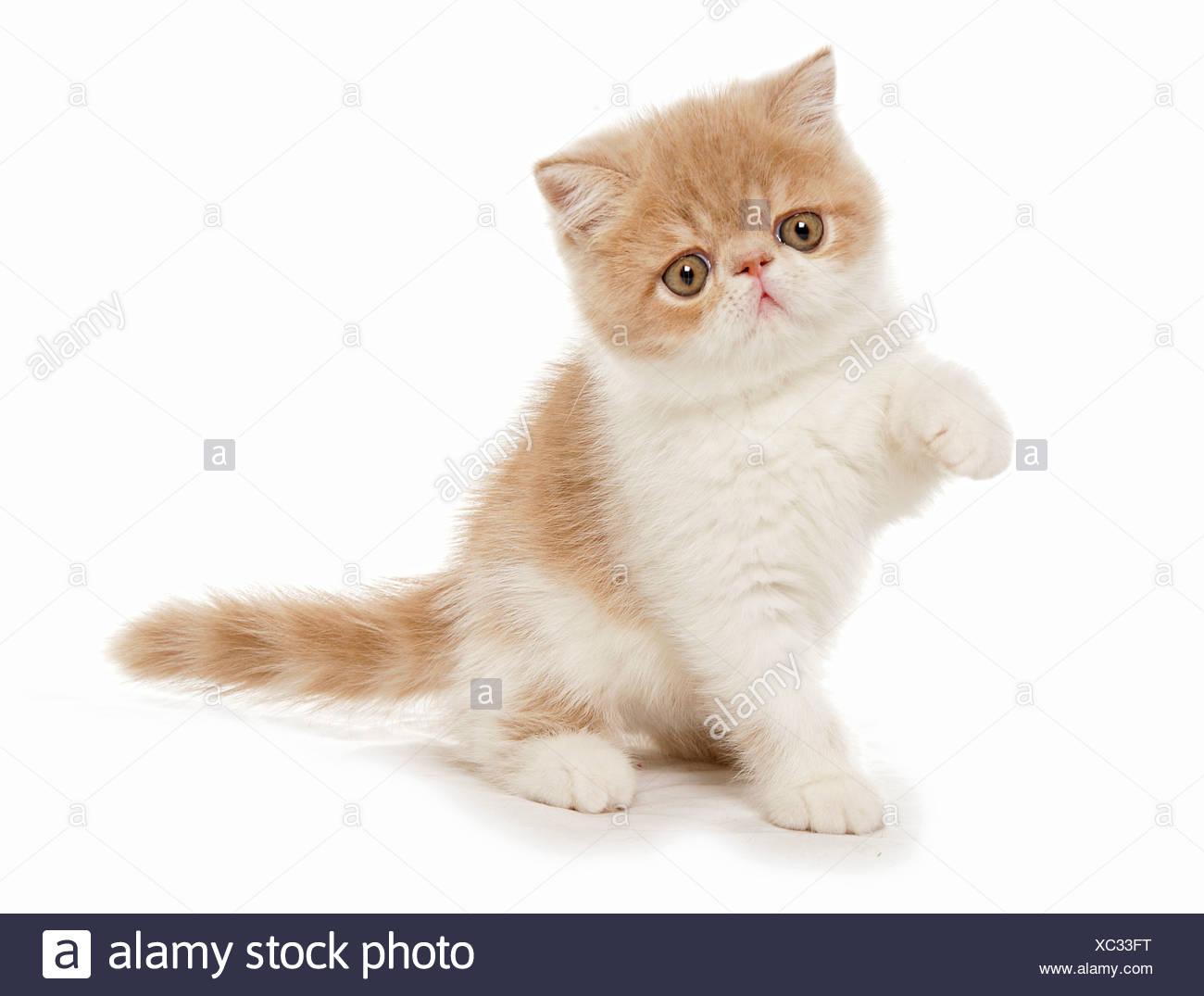 simmer kitten tumblr