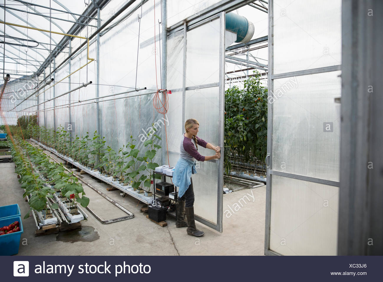 Female farmer opening greenhouse door - Stock Image