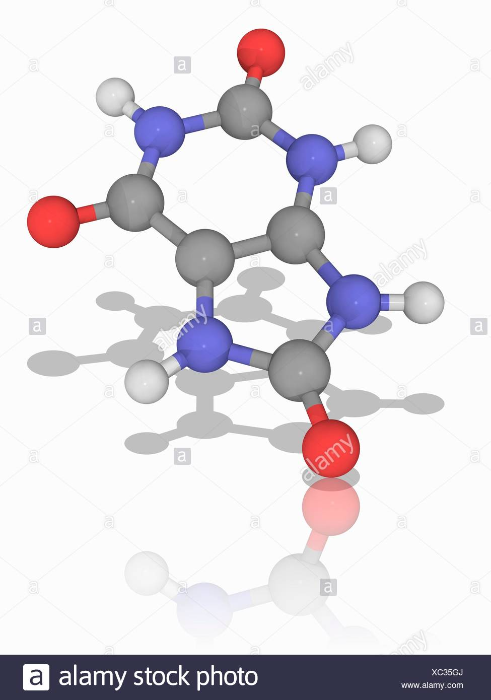 Uric acid. Molecular model of the organic compound urea (C5.H4.N4.O3), created when the body breaks down purine nucleotides. Atoms are represented as spheres and are colour-coded: carbon (grey), hydrogen (white), nitrogen (blue) and oxygen (red). Illustration. - Stock Image