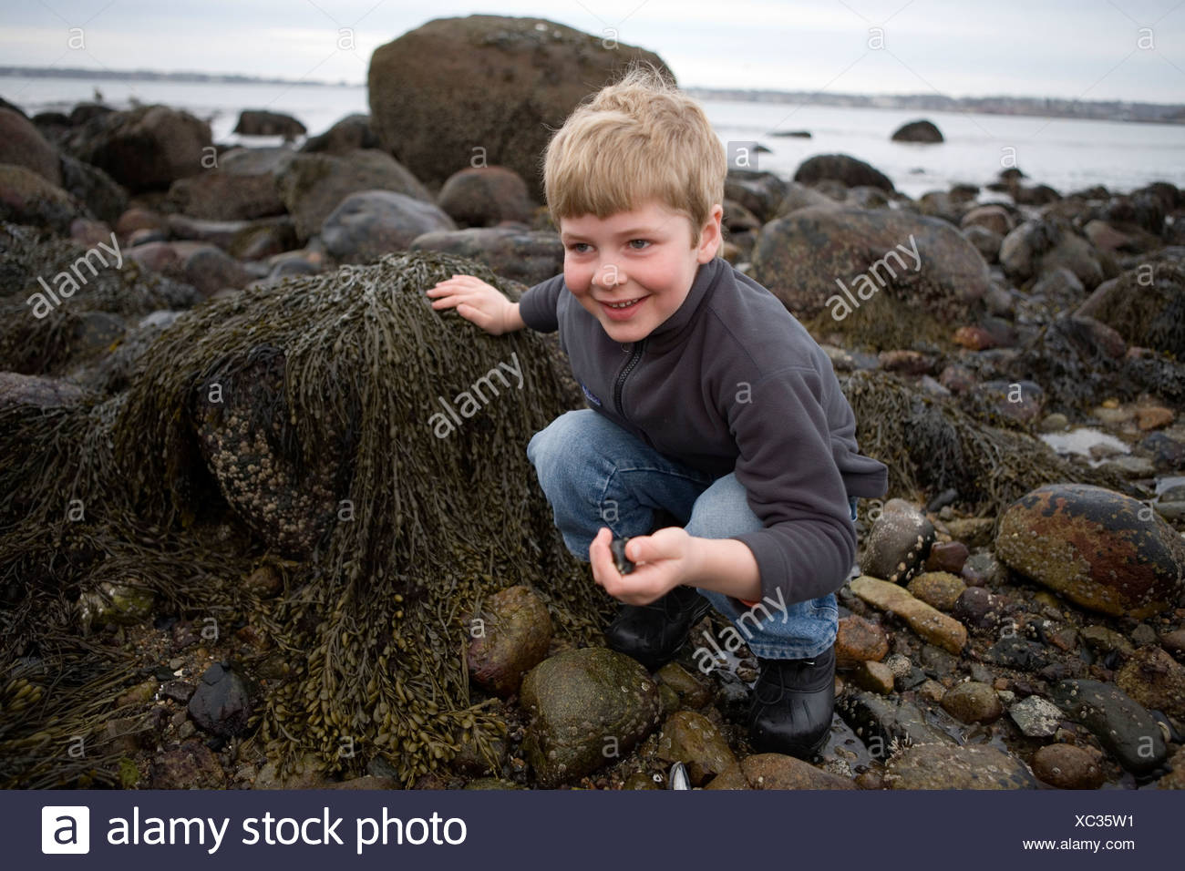 A boy exploring an inter-tidal zone. - Stock Image