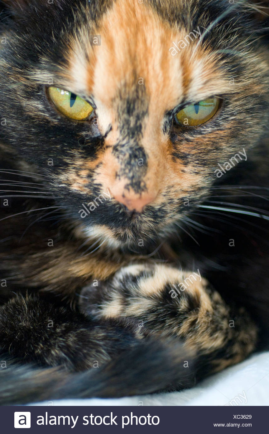 Detail portrait of an angry cat - Stock Image