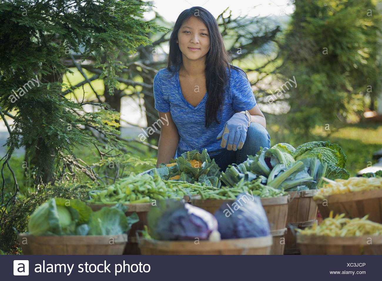 New York state USA young woman in field market garden fresh vegetable - Stock Image