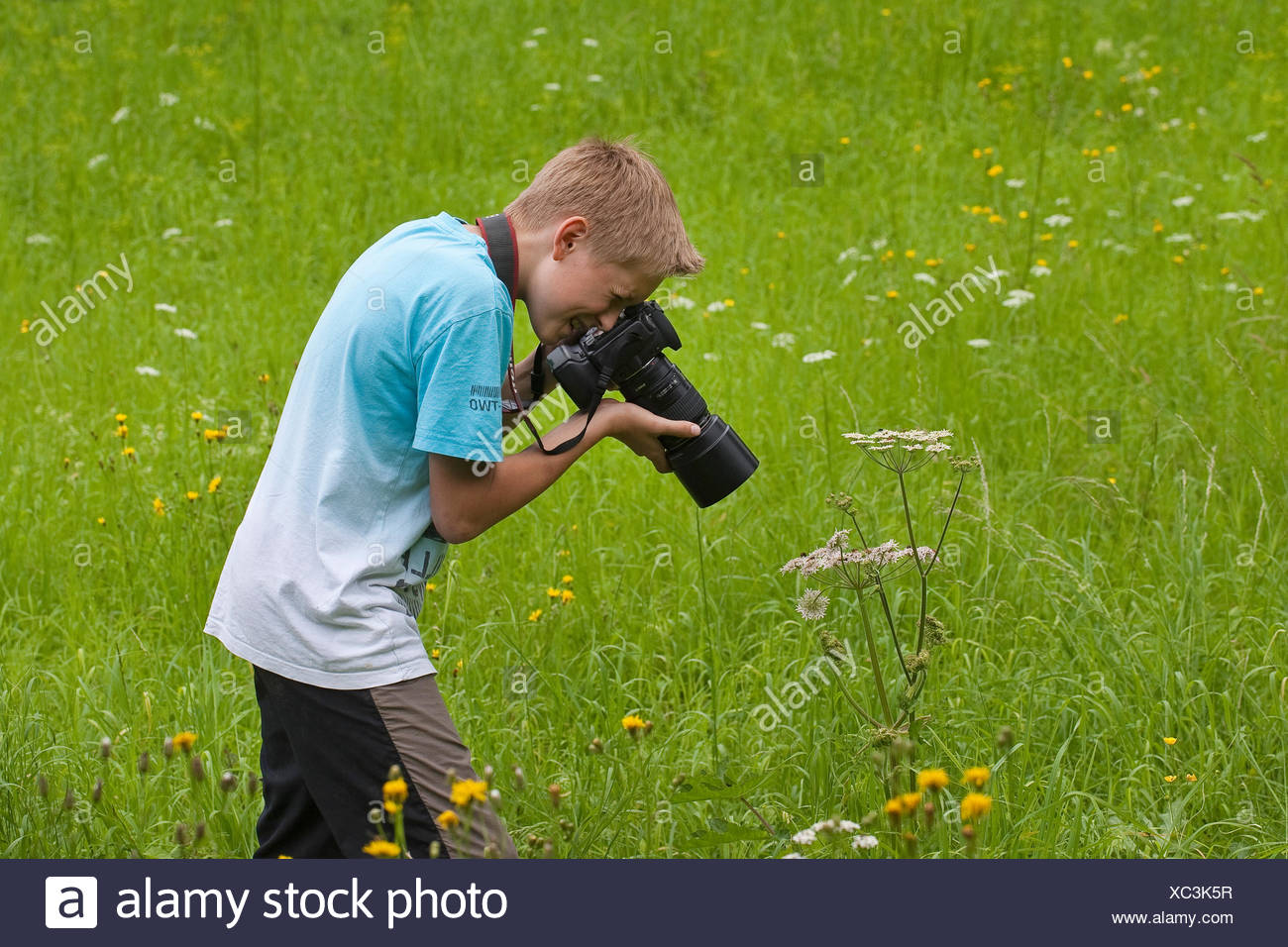 boy photographs in nature, Germany - Stock Image