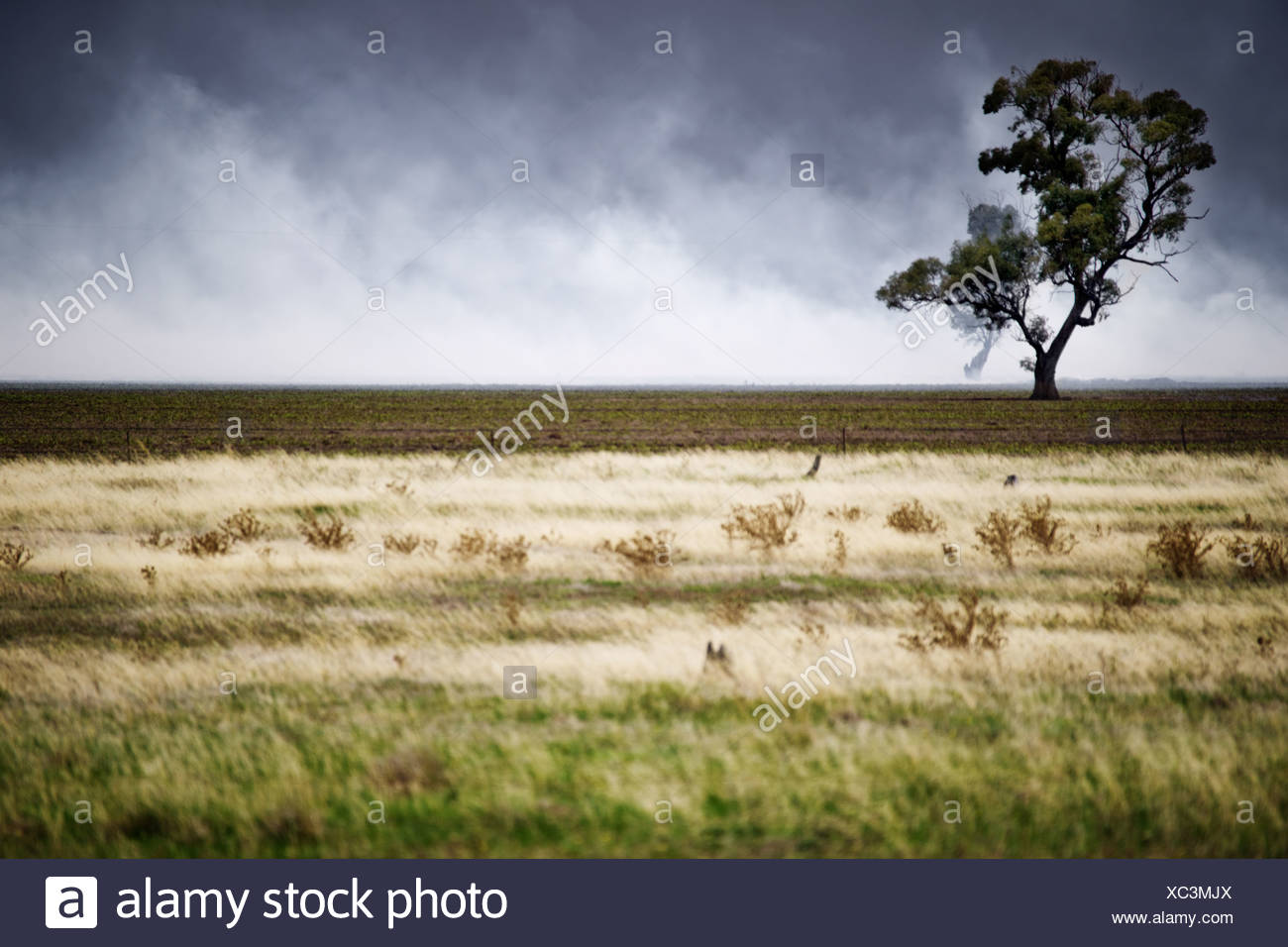 Focus on tree that is about to be enveloped by a fire - Stock Image
