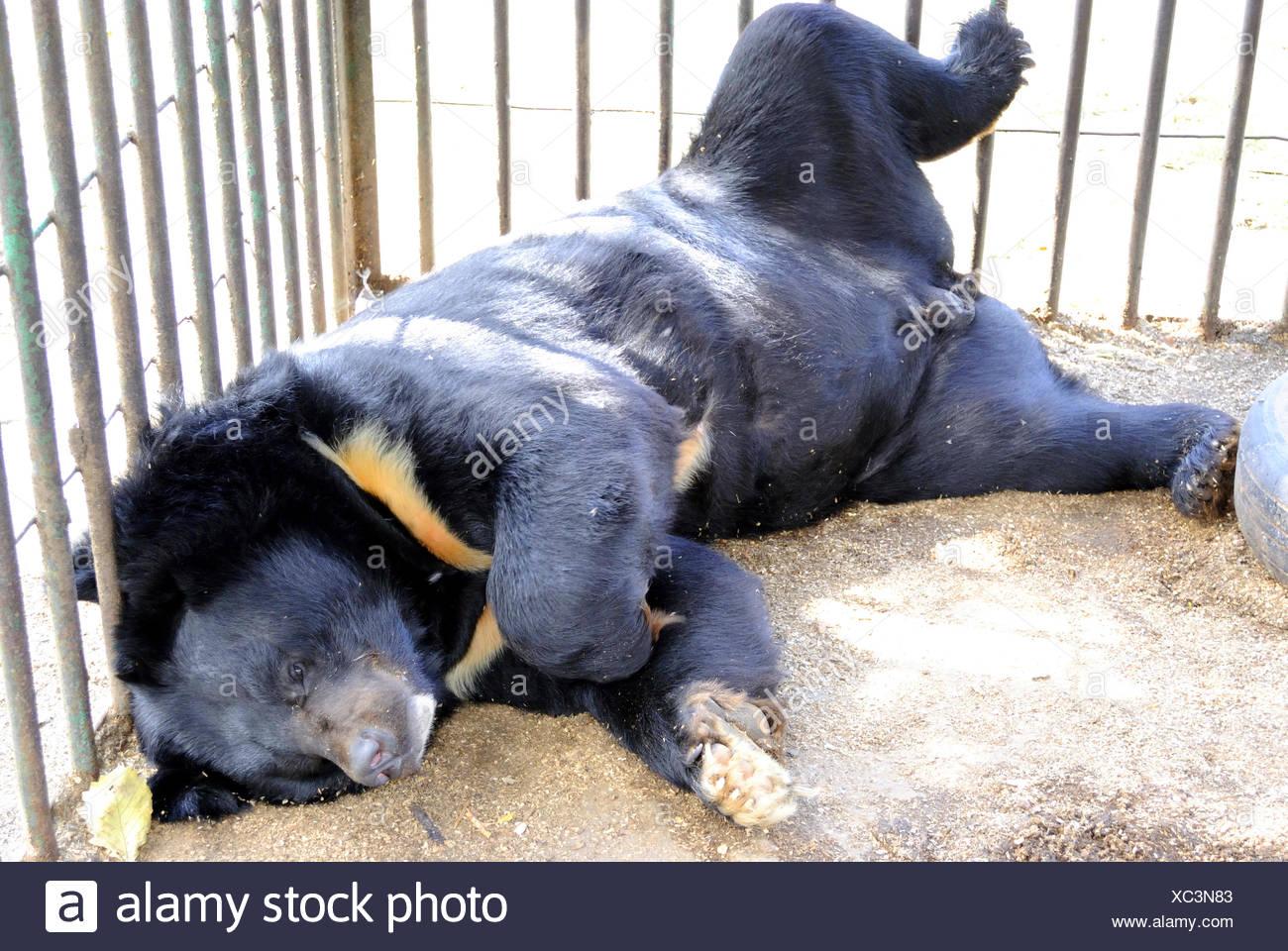 Bear - Stock Image