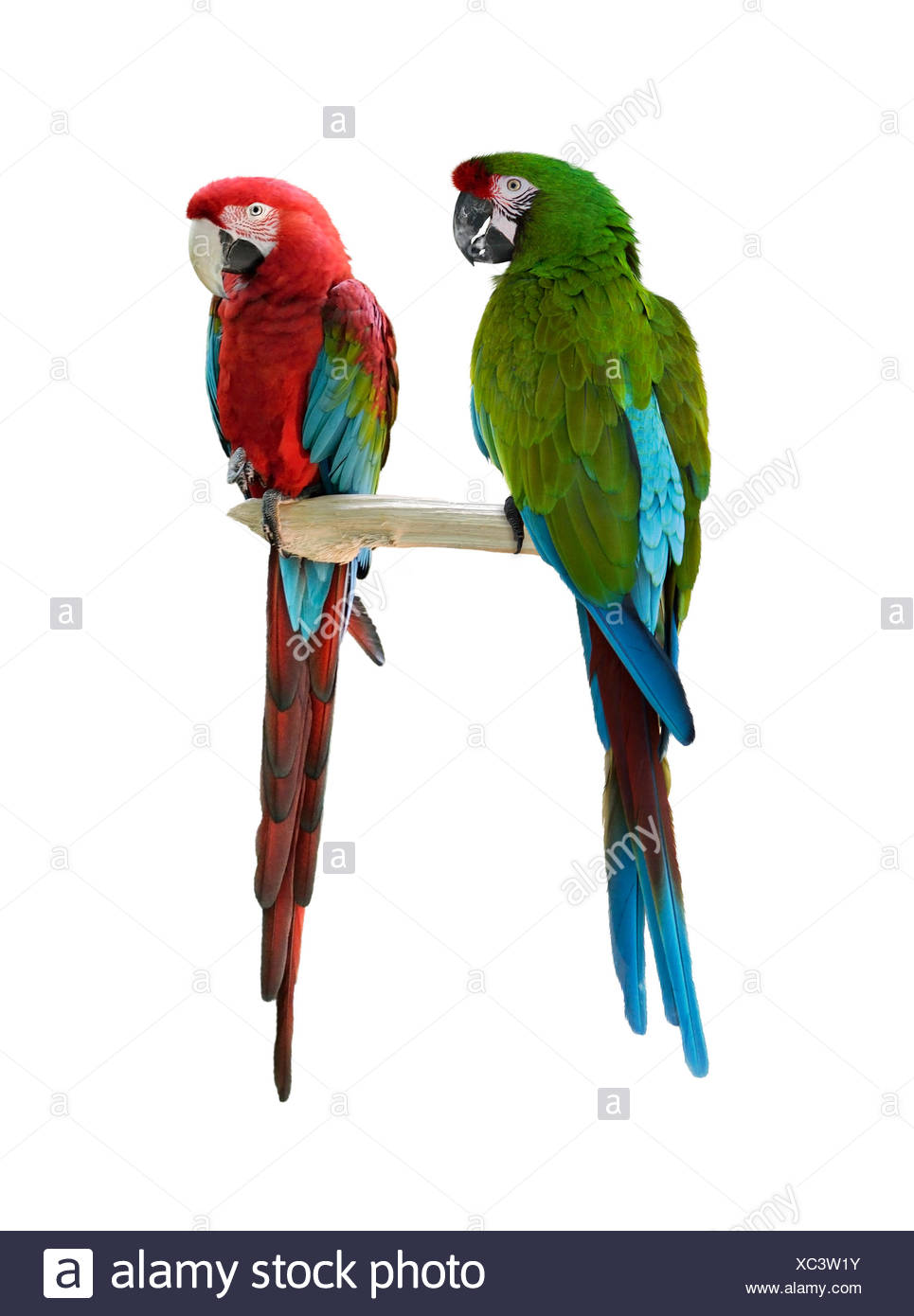 Parrots Cut Out Stock Images Pictures Alamy Parrot Origamiorigami Macaw Parrotorigami Diagram Colorful Image