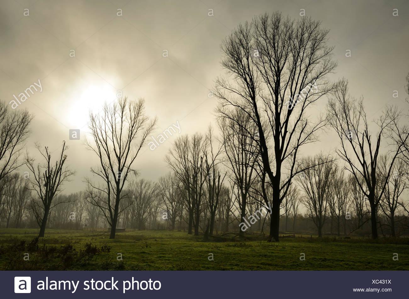 Germany, North Rhine-Westphalia, Neuss, mystical atmosphere at nature reserve - Stock Image