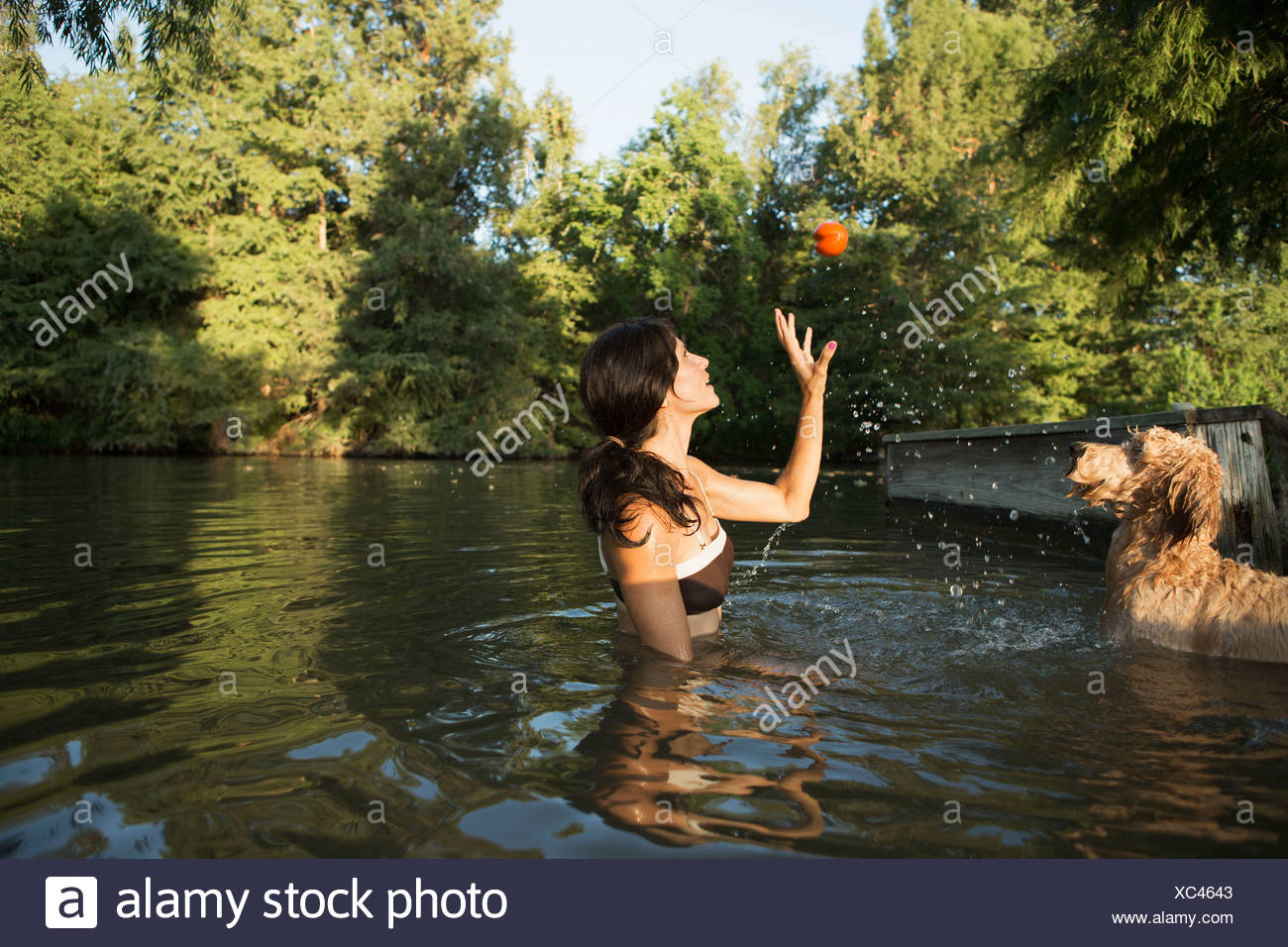 A woman swimming with her two dogs in a lake. Throwing the ball in play. - Stock Image
