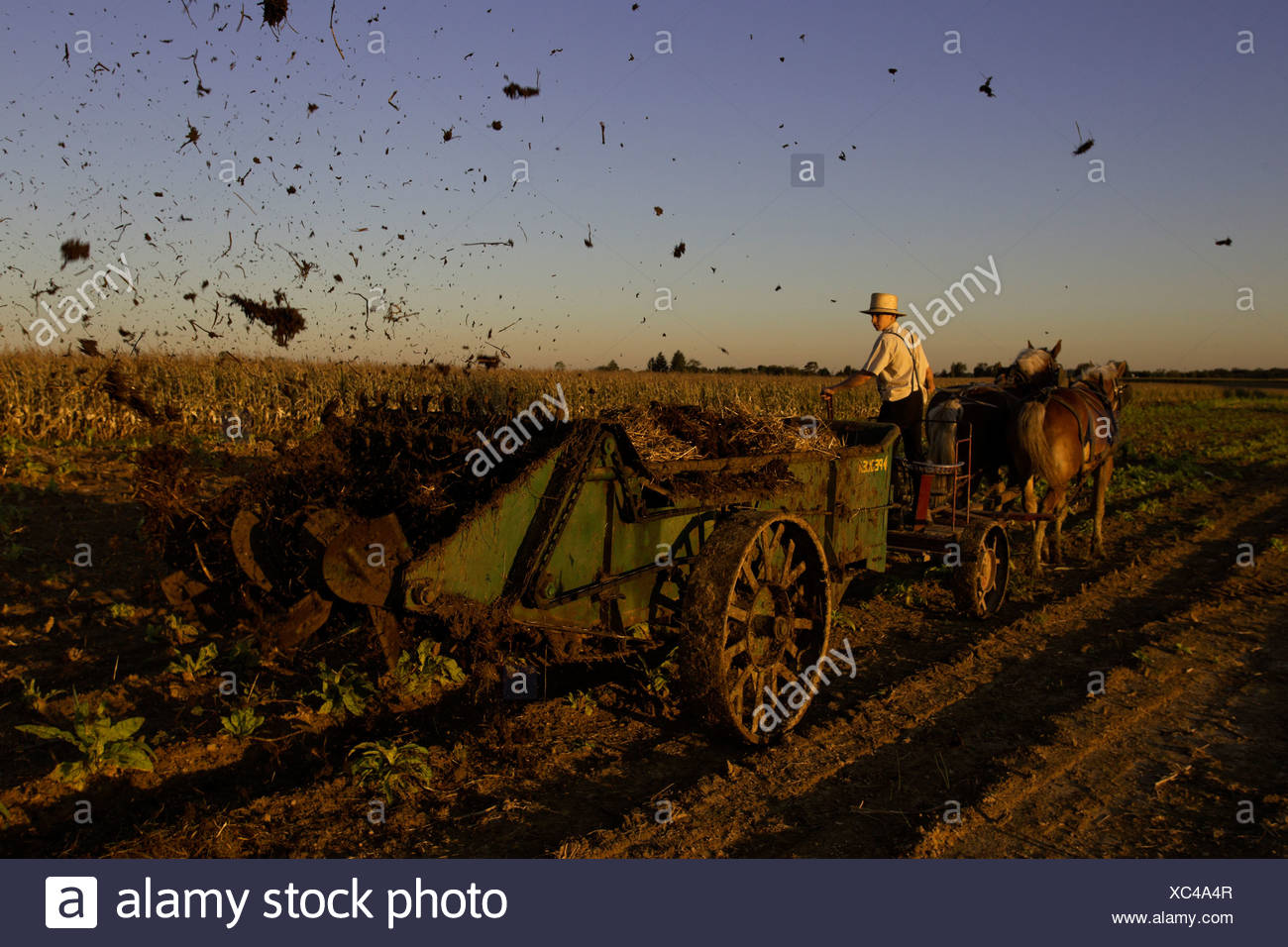 Amish farmers spreading manure from his cows on a corn field that was recently harvested on his farm in Oxford, PA. Stock Photo