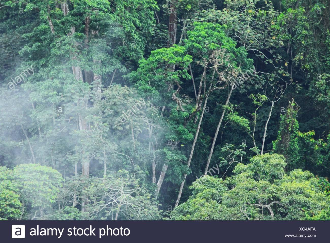 Rain Forest, San Diego De Los Altos, Miranda, Venezuela   Stock Image