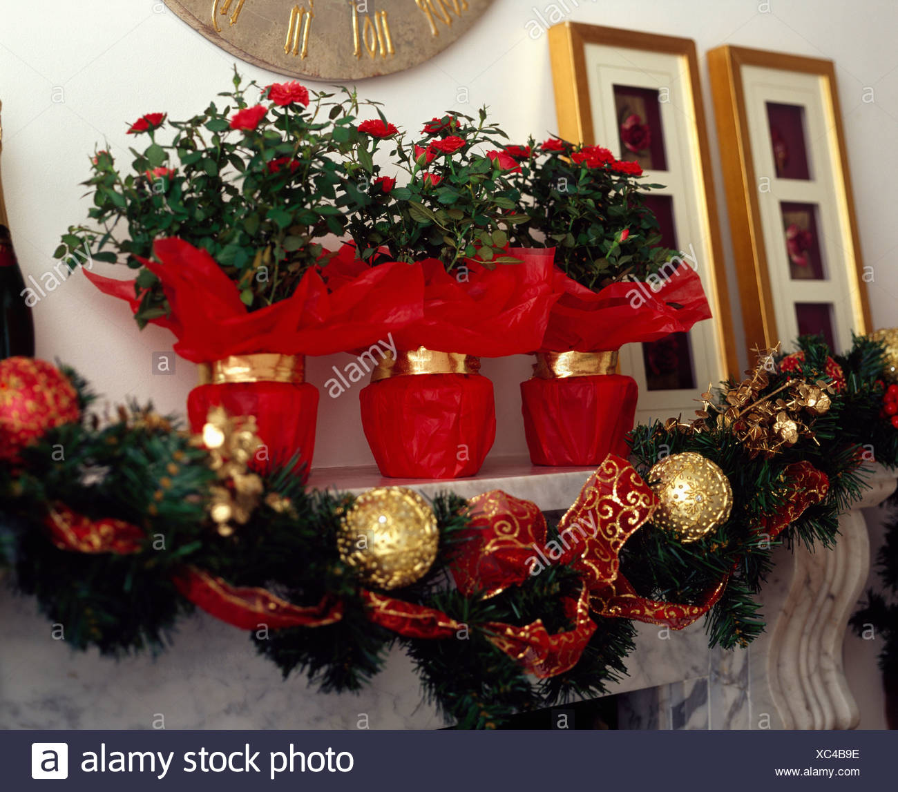 Red Rose Plants Wrapped In Red Paper Above Green Garland With Gold