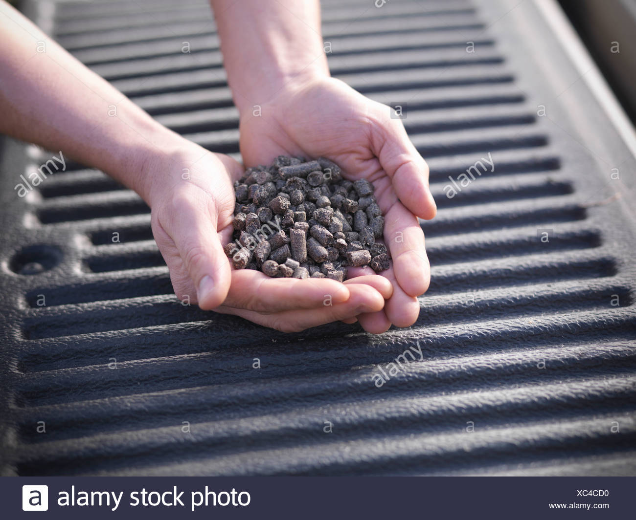 Hands holding pile of burned wood chips - Stock Image