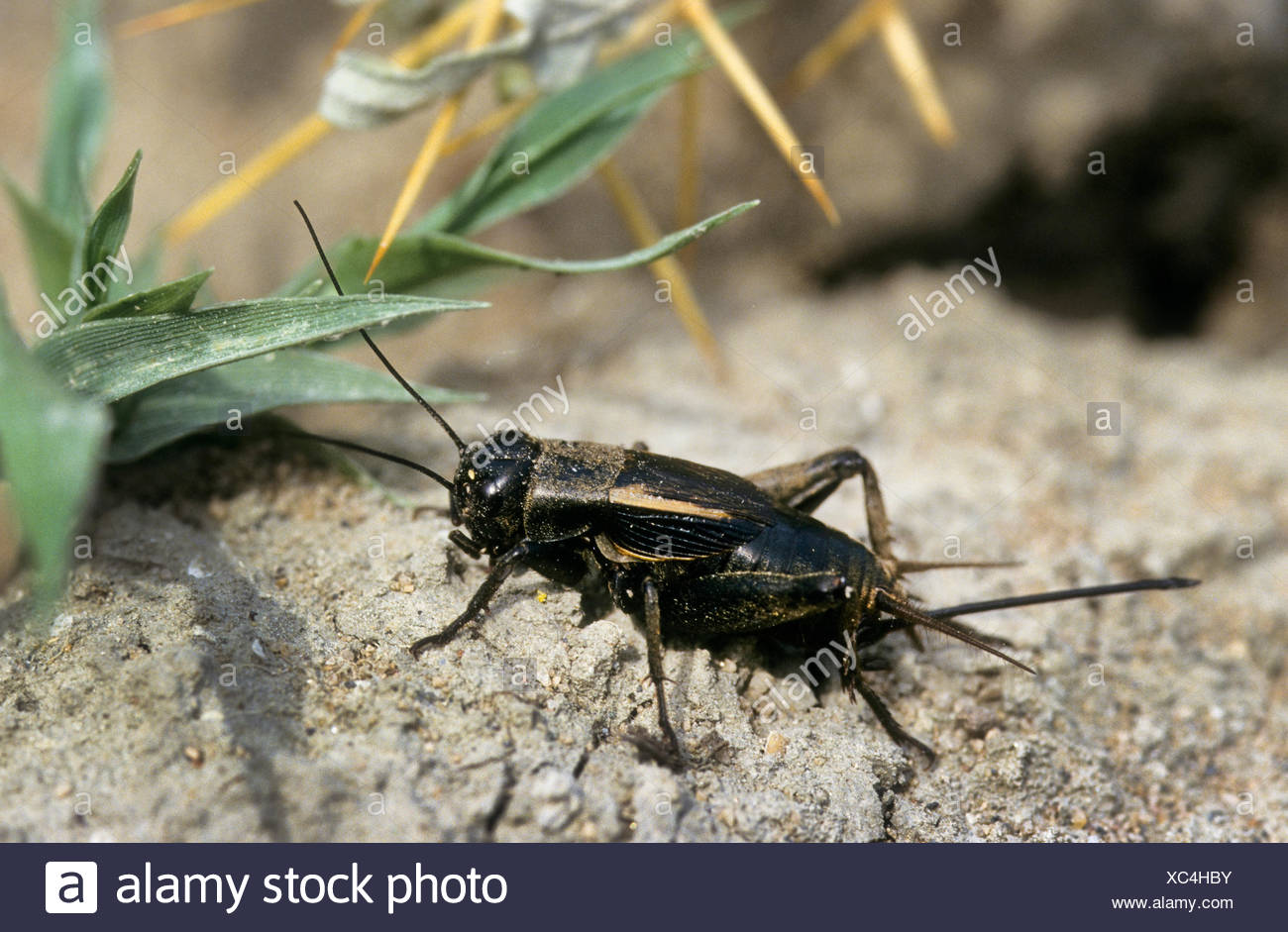 Desert Insects