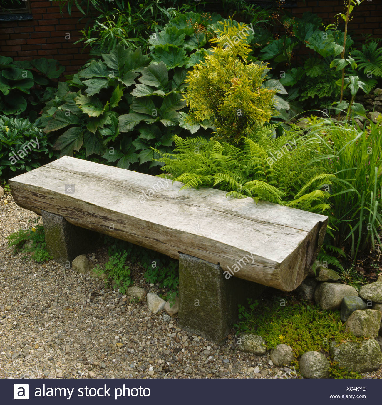 Fantastic Recycled Wooden Garden Bench In Front Of Ferns And Gunnera Machost Co Dining Chair Design Ideas Machostcouk