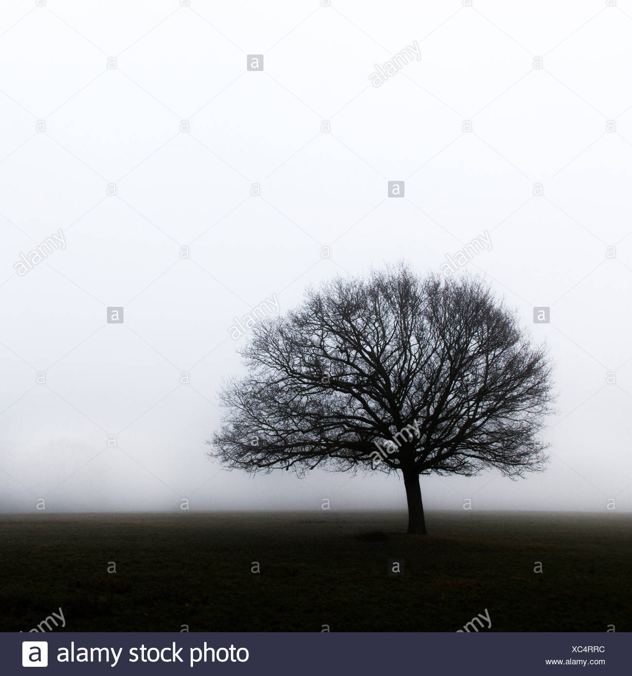 Lone tree in the mist - Stock Image