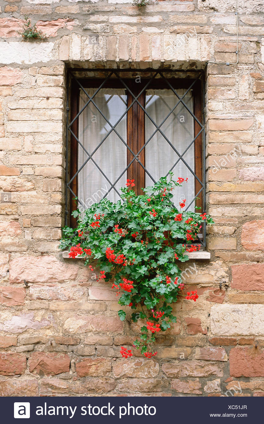 Red flowers on a window - Stock Image
