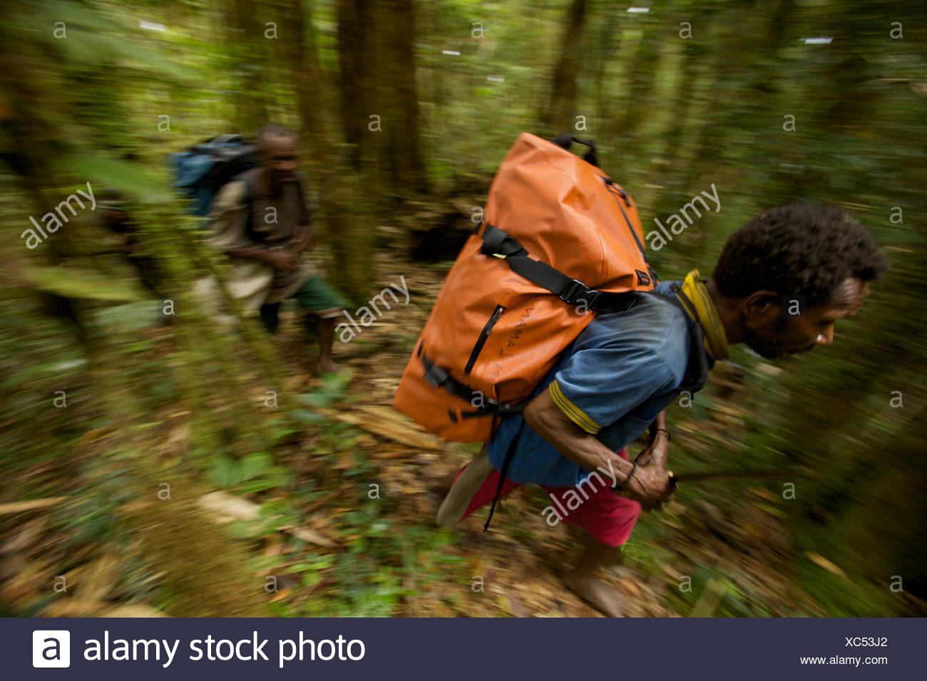Local porters carry expedition gear to camp in the Arfak Mountains. - Stock Image