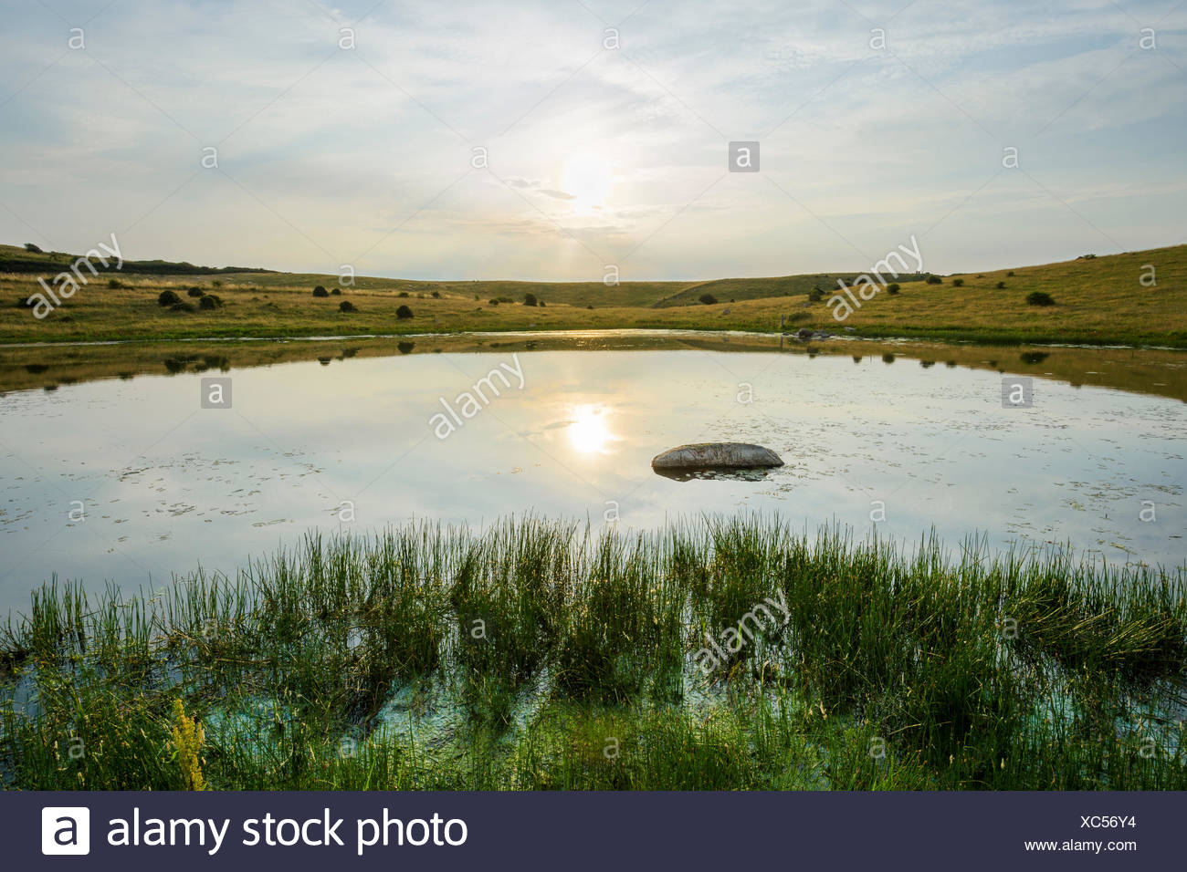 Inland Lake with Sun in Summer, Fyns Hoved, Hindsholm, Kerteminde, Funen, Baltic Sea, Denmark - Stock Image