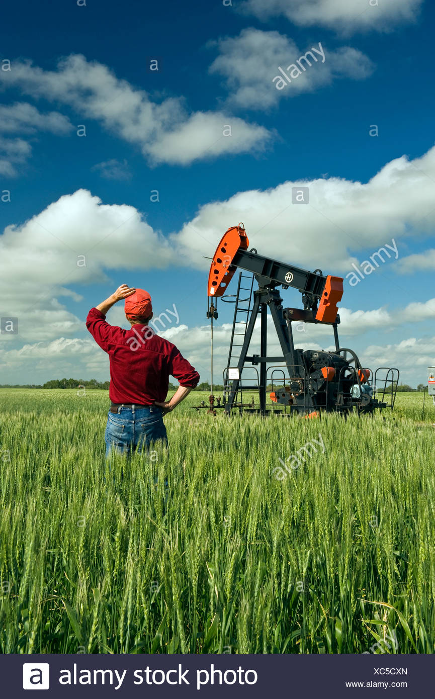 a man looks out over a wheat field with an oil pumpjack in the background, near Sinclair, Manitoba, Canada - Stock Image