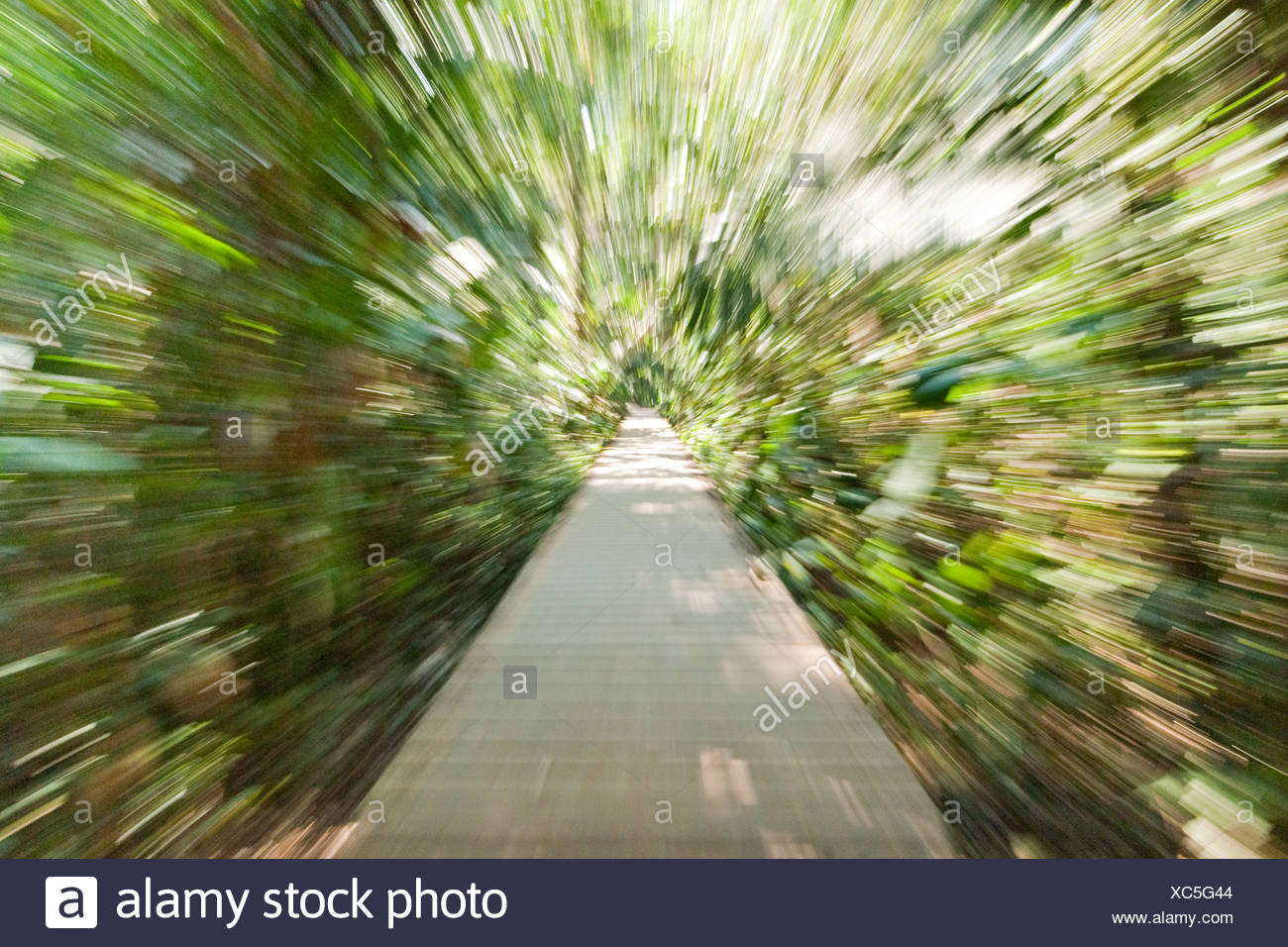 A wooden path through the rainforest in warped speed. Stock Photo