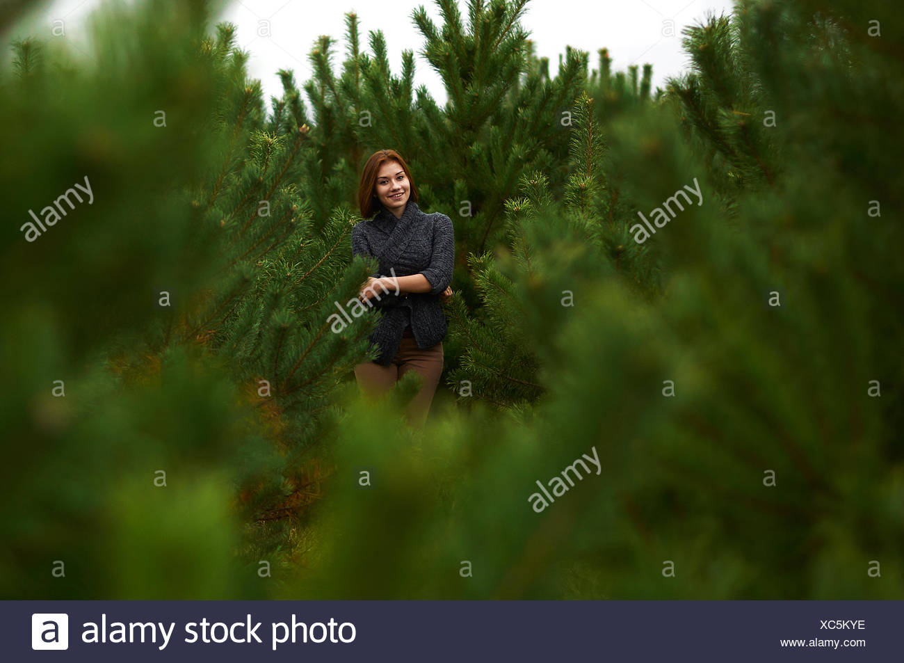Portrait of young woman standing amongst young pine trees - Stock Image