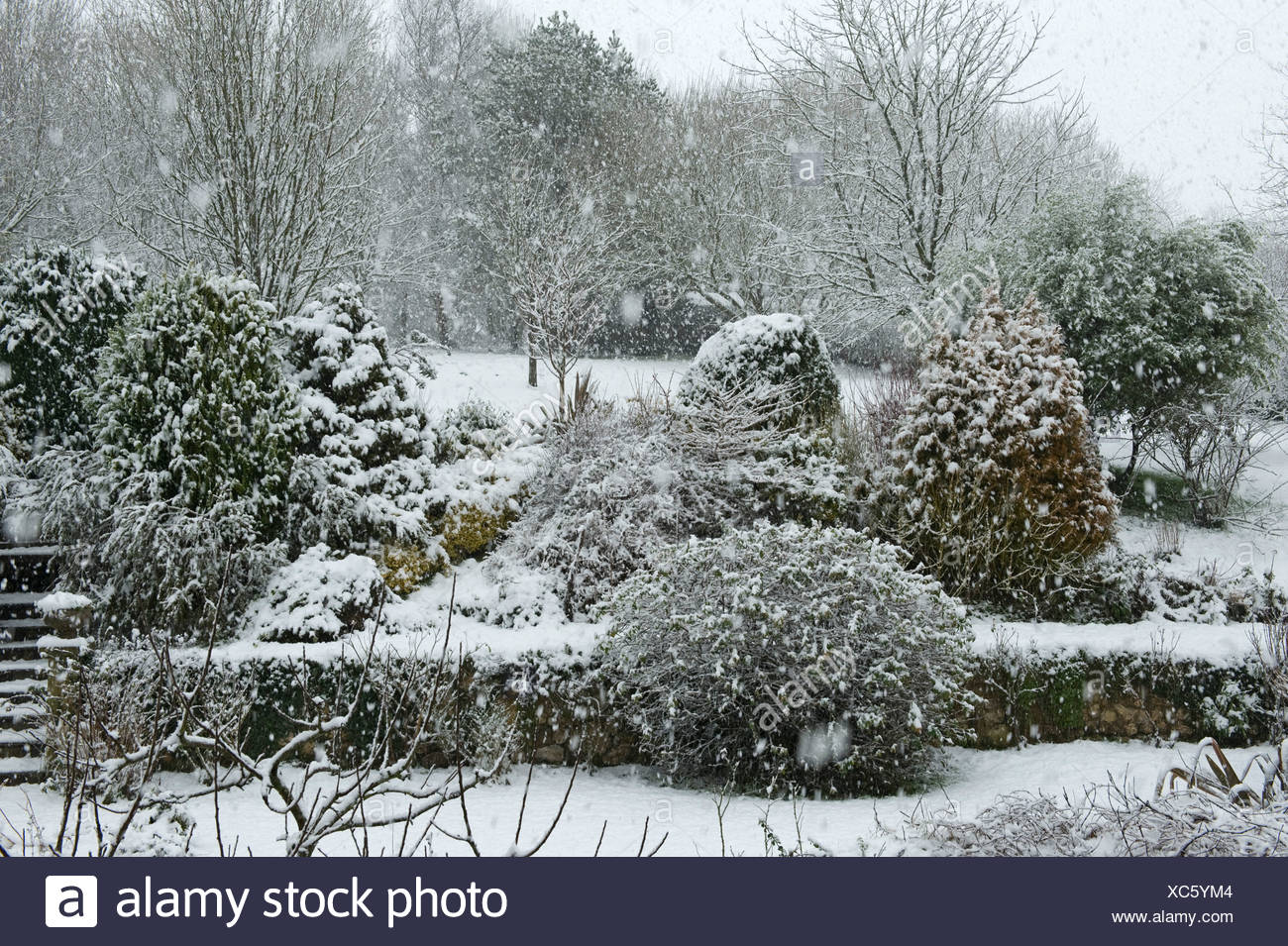 Garden & shrubs in a heavy snow storm, Devon, - Stock Image