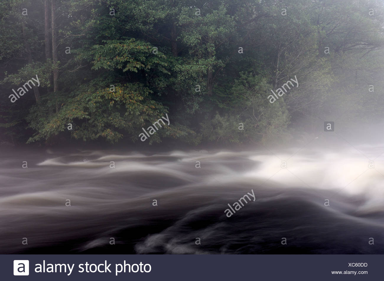 A small river in nature reserve, Vastergotland, Sweden. - Stock Image