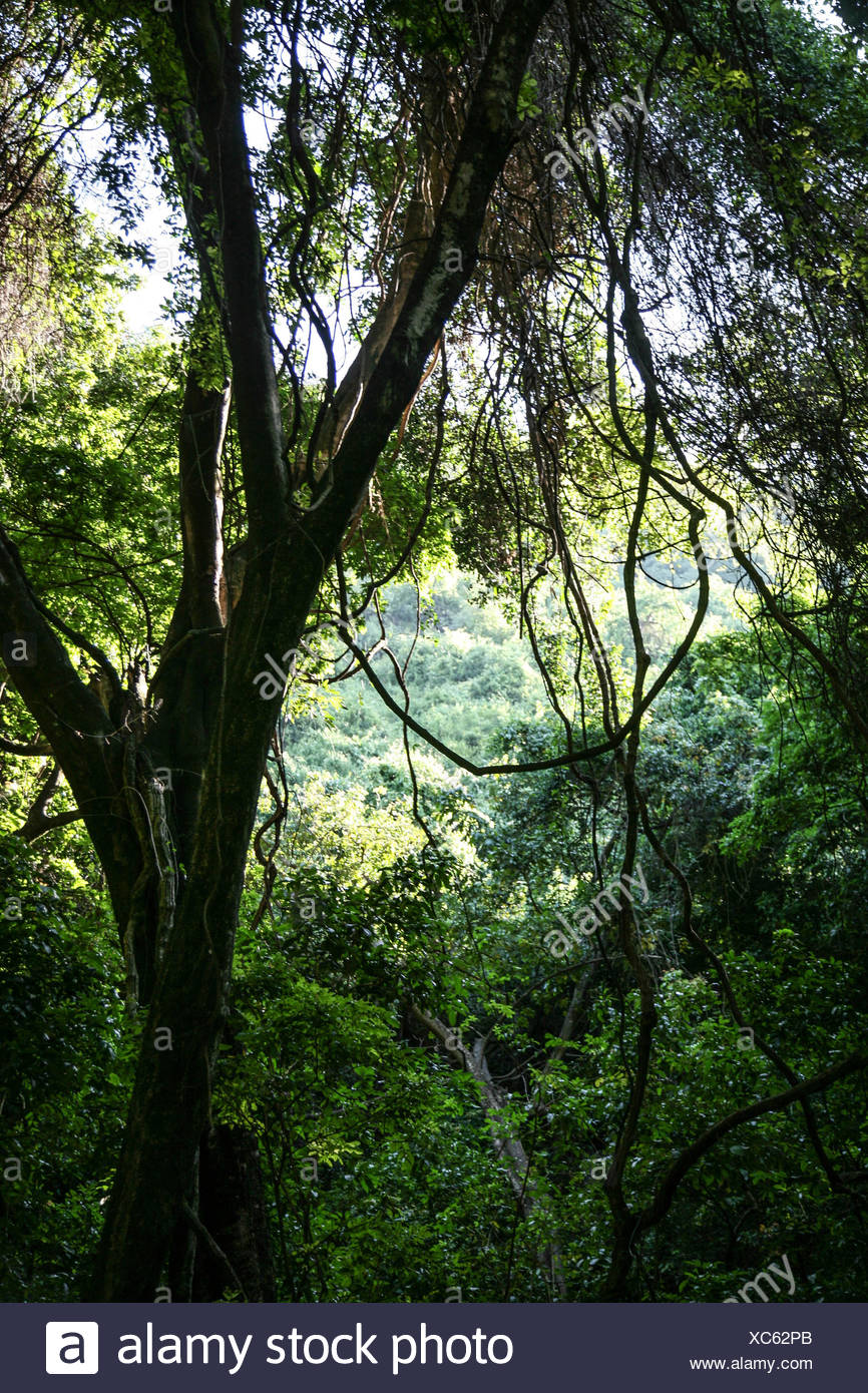 Nechisar national park, area of Semien Omo, part of the region of the Southern Nations, Ethiopia, forty sources area Stock Photo